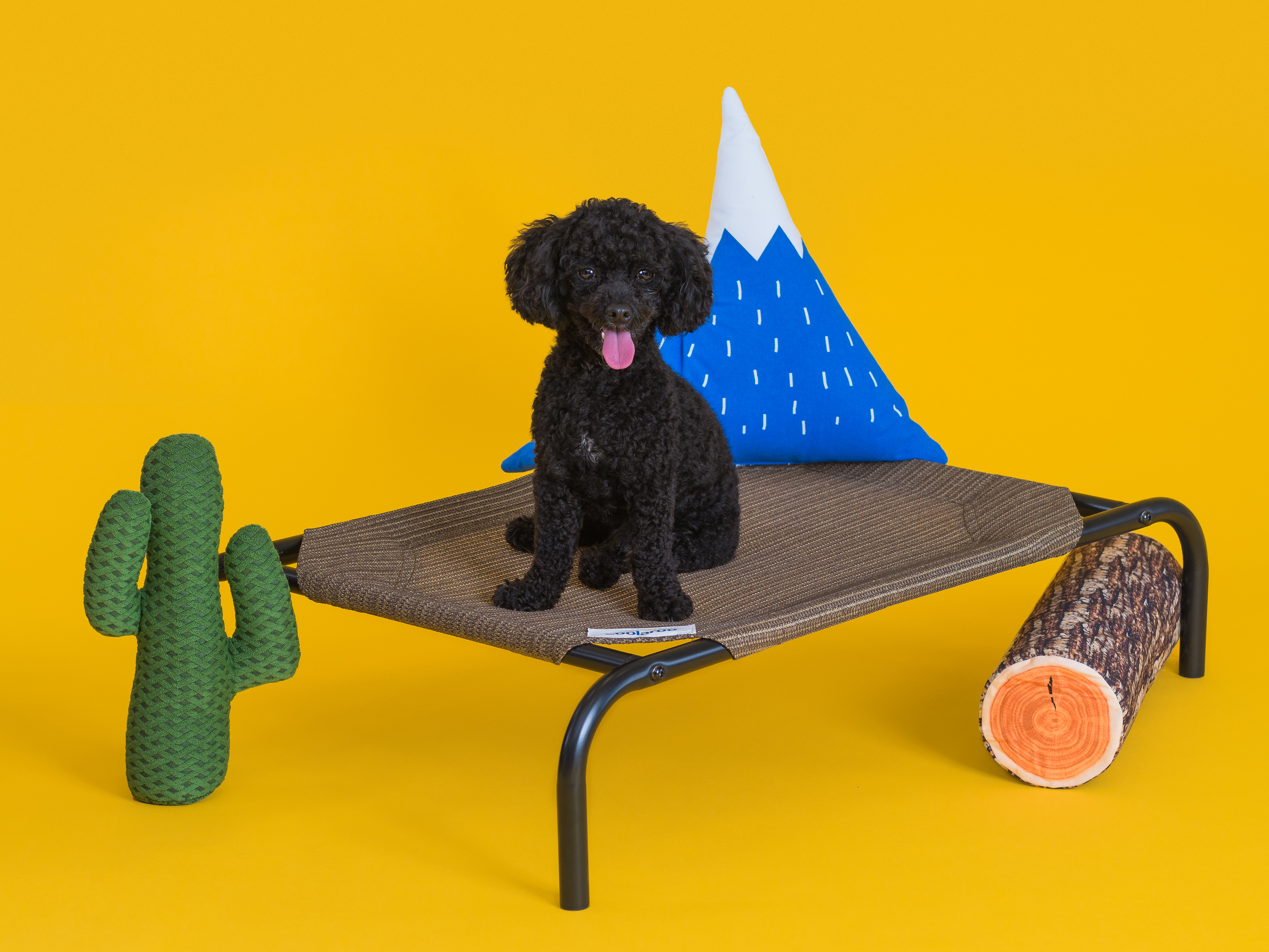 Picture of: The Original Elevated Small Pet Bed Coolaroo